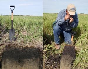 dobra kondycja gleby - badanie przeprowadzane na polu.