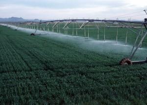 deszczowanie pola zbóż