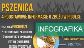 inforgrafika-podstawowe-informacje-o-pszenicy