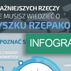 infografika_słodyszek_header
