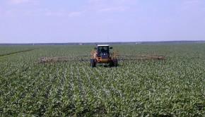 herbicydy - chwasty w zbożu