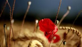 środek ochrony roślin na chwasty