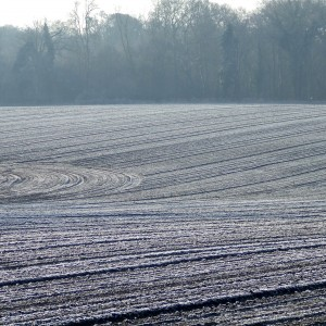 zima może mieć duży wpływ na plonowanie pszenicy i rzepaku