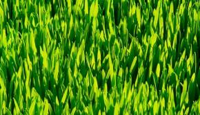 Zapotrzebowanie na mikroelementy jest kluczowe na wiosne