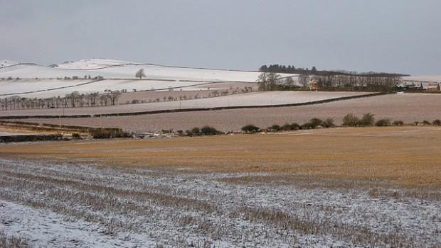 jak przygotować pole na zimę