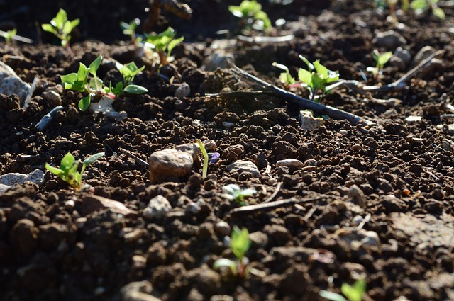życie glebowe