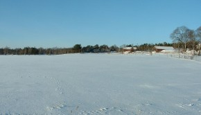 mrozy i brak śniegu