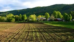planowanie wiosennych zabiegów