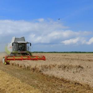 Rynek zbóż