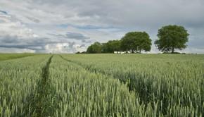 Choroby podsuszkowe zbóż
