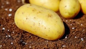 Biologiczne środki w uprawie