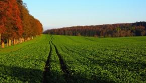 stosowanie nawozów zielonych