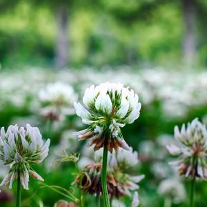 nawozy zielone wiosna