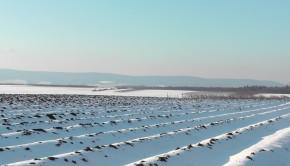 prace-w-rolnictwie-zima