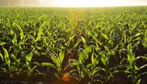 stosowanie herbicydów