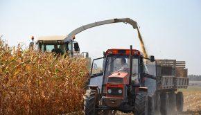 zbiór kukurydzy