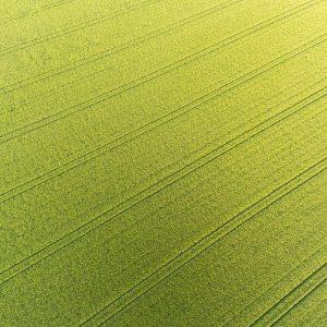 Podział fungicydów