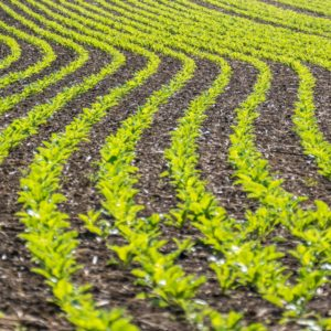stosowanie herbicydow