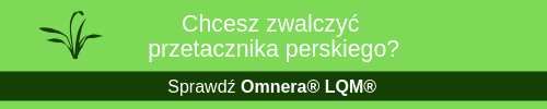przetacznik-perski-omnera