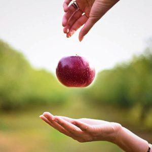 zdolność-przechowalicznia-jabłek