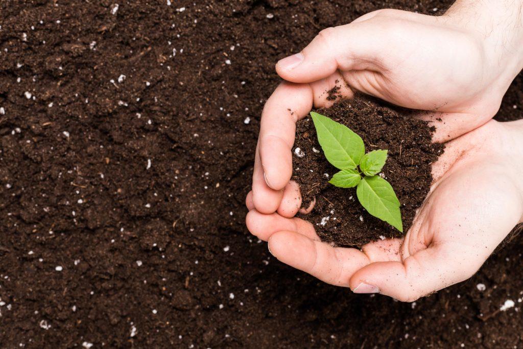 odczyn-gleby-wskaźniki-chwasty