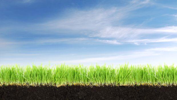 odczyn-gleby-co-mowia-chwasty