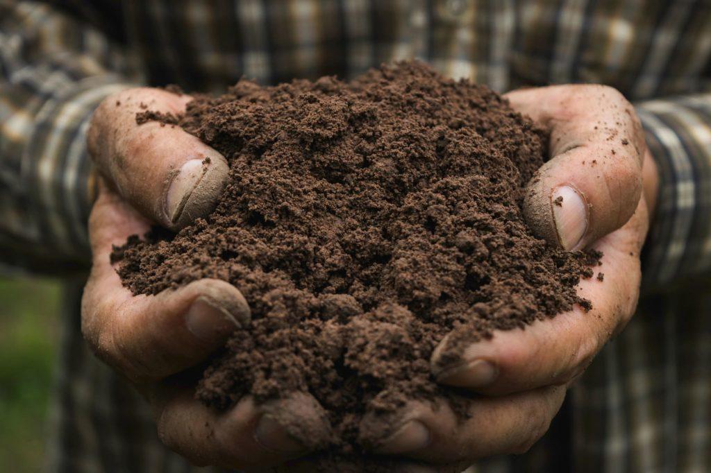 zakwaszenie-gleby