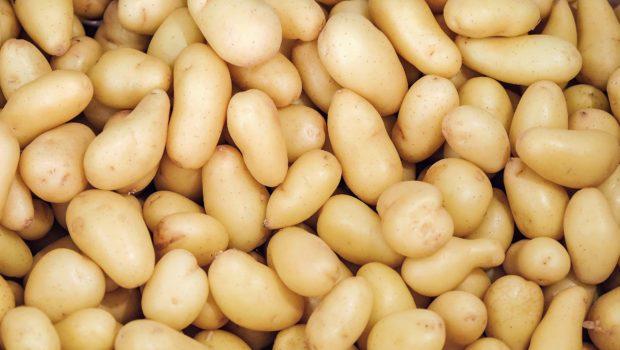 ziemniaki-w-uprawie