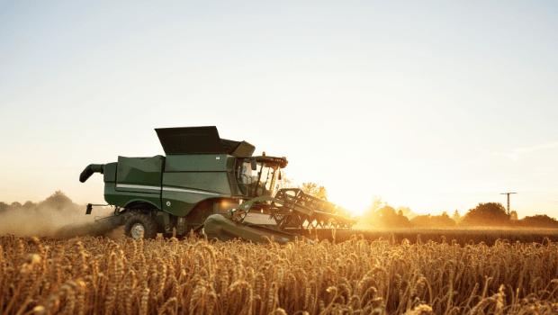 Łamliwość źdźbła zbóż