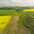 plantacja-rzepaku-widok-z-gory