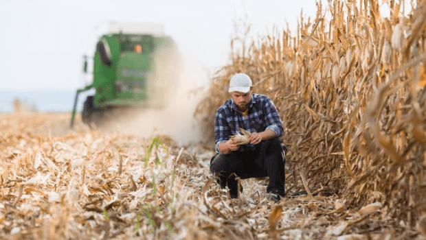 zbior kukurydzy na ziarno-min