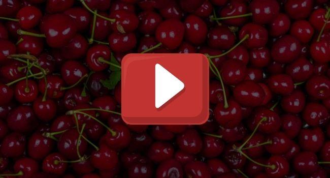 YouTube-Exirel-muszka-plamoskrzydla