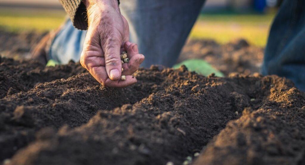 rolnik sieje rośliny na swoim polu