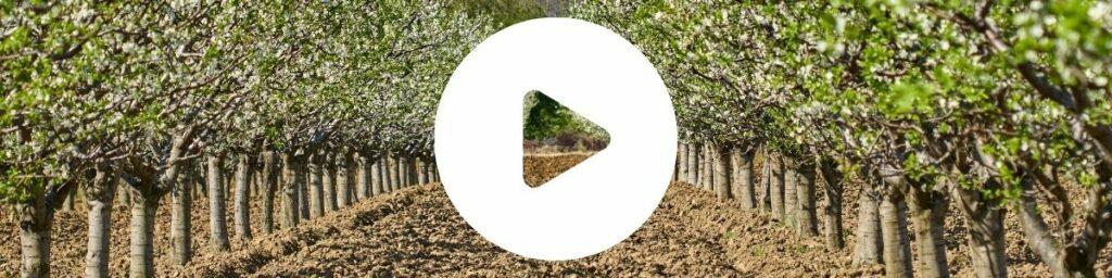 Sad czereśnia - wideo ochrona czereśni i wiśni