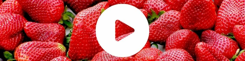 Kampania Cennyowoc uprawa truskawki video