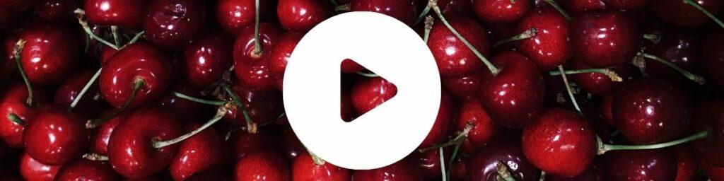 Kampania cennyowoc uprawa czereśni wideo