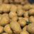 ziemniak-desykacja-naci-ziemniaka